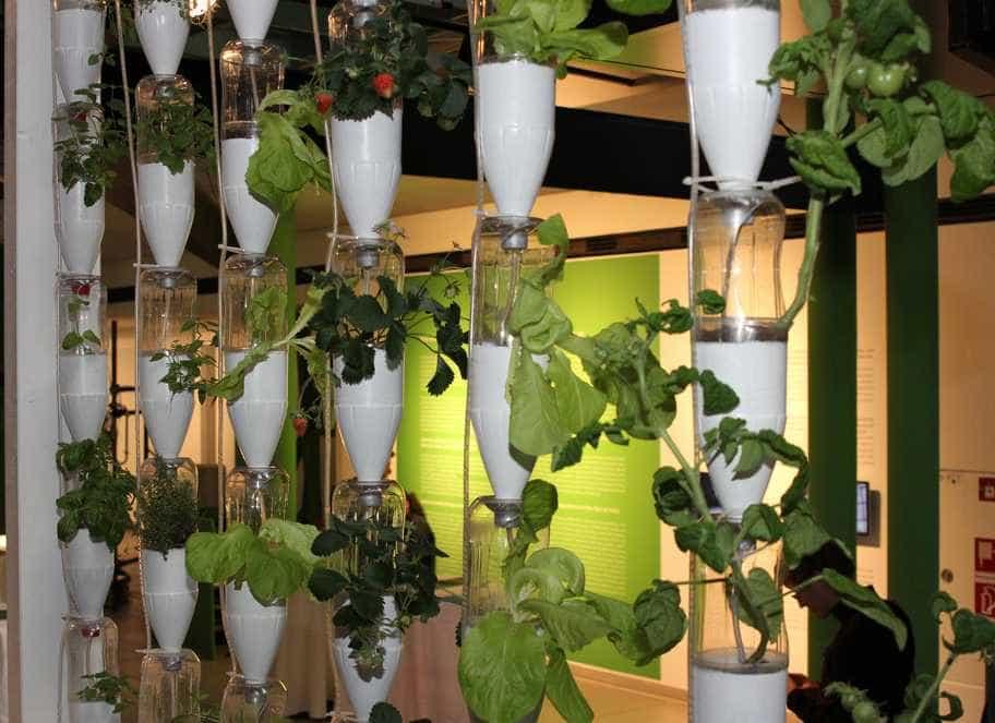 Rostliny do bytu zkrátka patří, pixabay.com