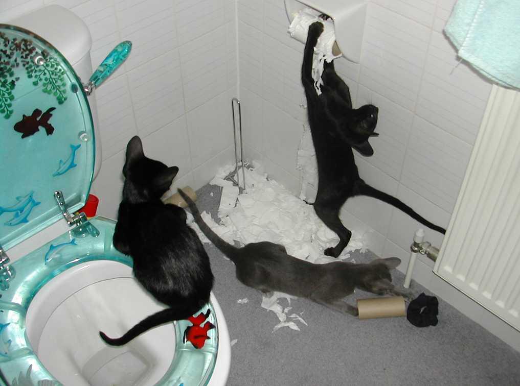 Pozor na domácí mazlíčky, flickr.com