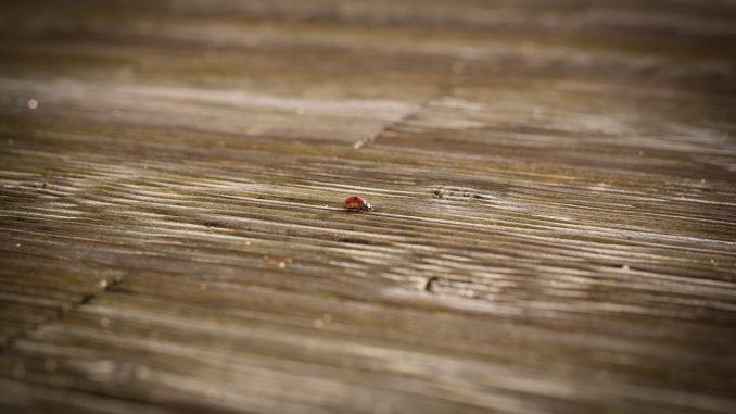 Životnost dřevěných teras